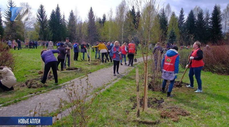 В Междуреченске высадили почти тысячу деревьев и кустарников