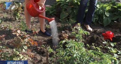 Ученики гимназии №6 высадили 75 роз