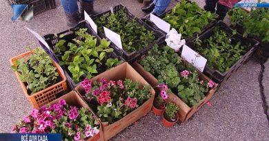 7 сентября пройдёт ярмарка «Все для сада и огорода»
