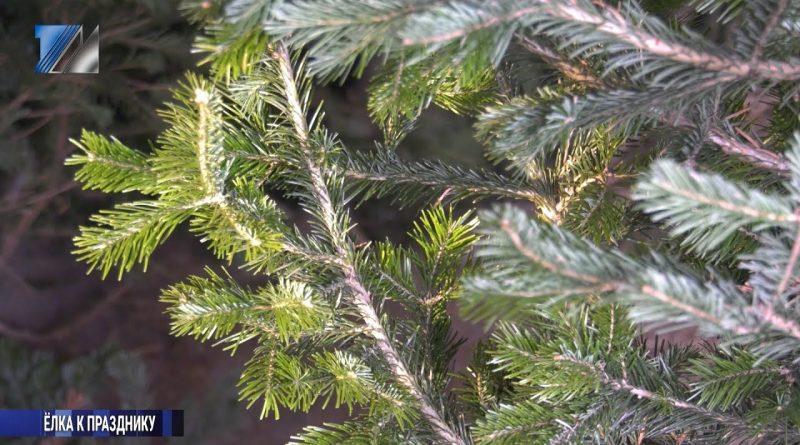 Что необходимо помнить, приобретая новогоднюю ель