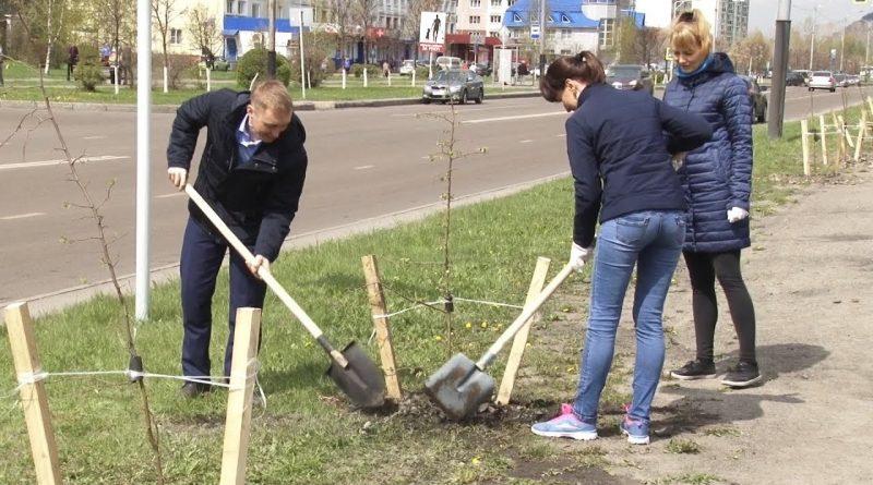 Единый день посадки деревьев