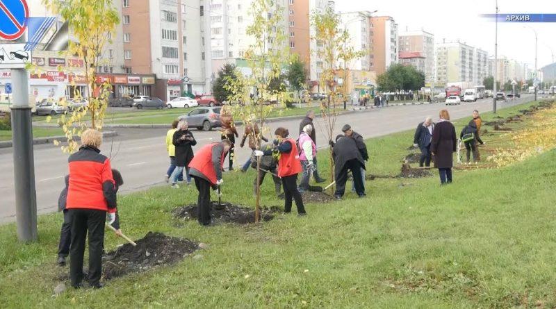 В Кузбассе ко Дню Победы высадят яблоневую аллею
