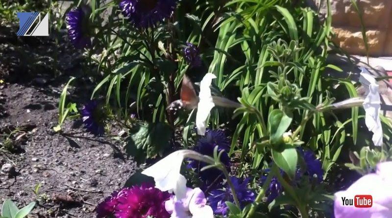 Междуреченцы засняли редкую бабочку